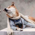 Mascotas Influencers, la nueva tendencia en las redes sociales